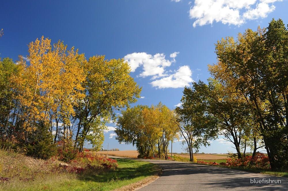 Fall Trees by bluefishrun