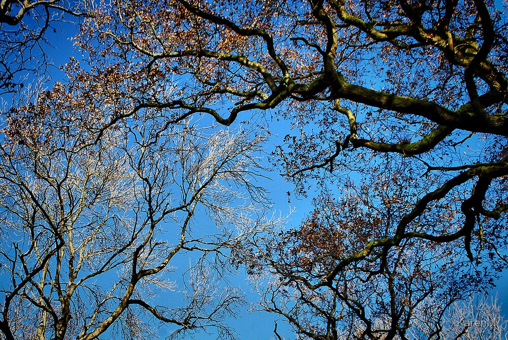 Blue Sky Trees by KarenM