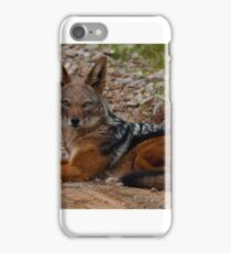 Black Backed Jackal iPhone Case/Skin