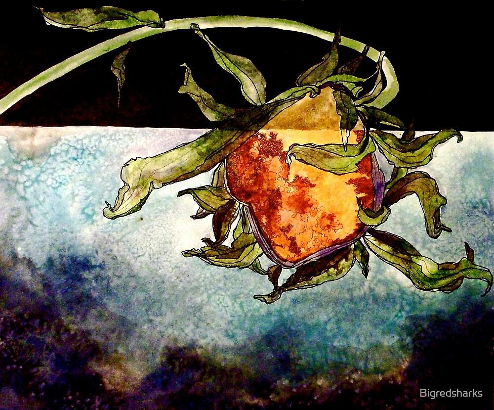 Dying Sunflower by Bigredsharks