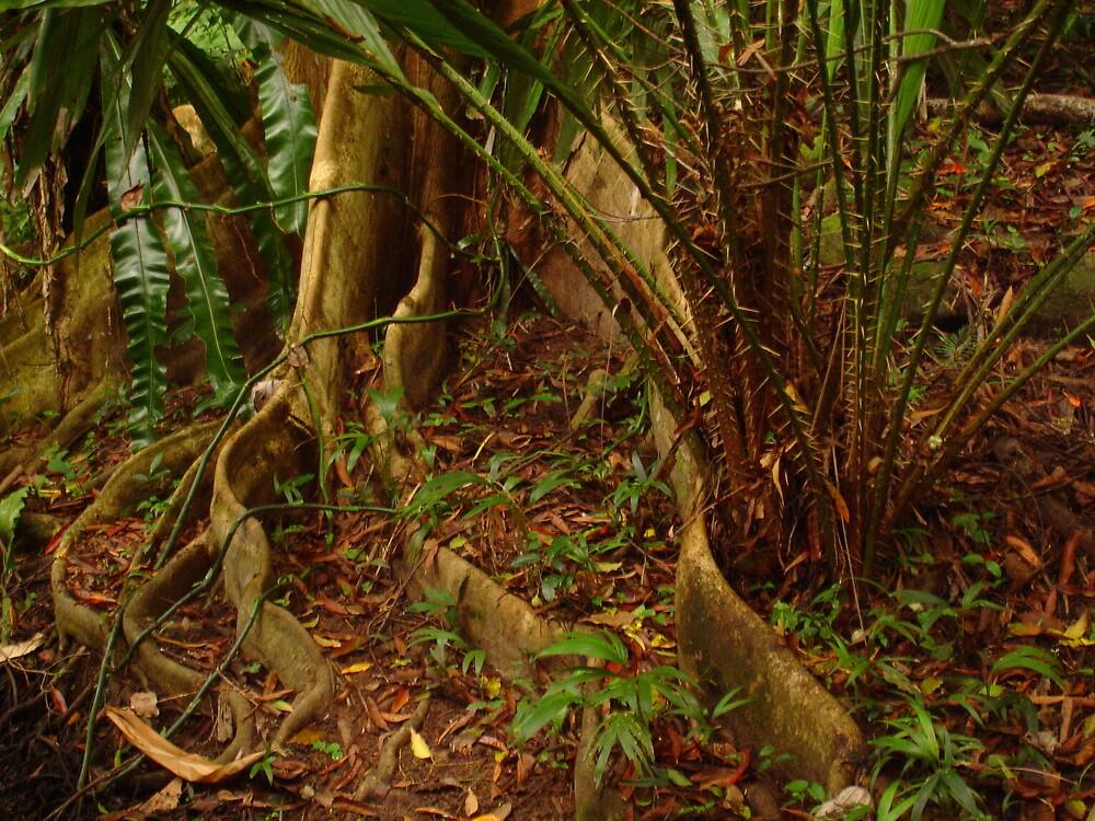 Cairns Botanic Gardens by lulu64