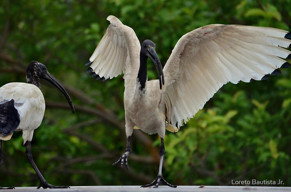 Dancing Ibis by Loreto Bautista Jr.