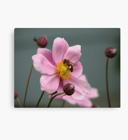 Work, Work, Buzz! Buzz! Canvas Print