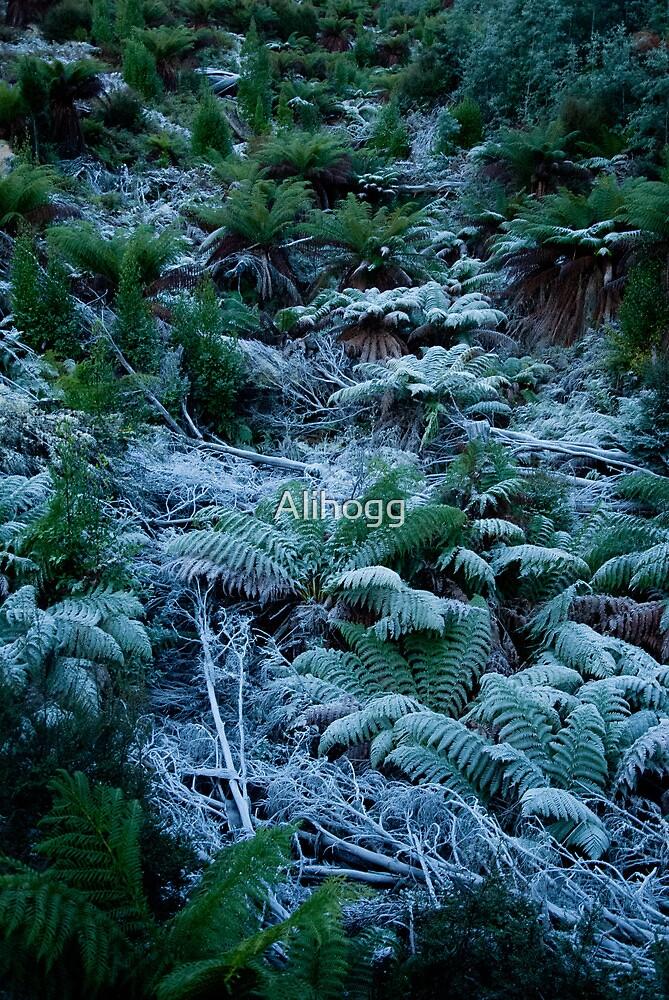 Icy Ferns by Alihogg