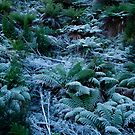 Icy Ferns by Alihogg