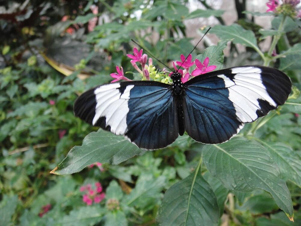 Butterfly by Sachi Byrne