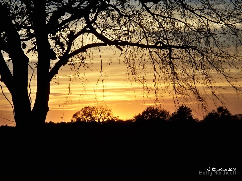 Twilight Shadows - Tree silhouette in golden sunset by Betty Northcutt