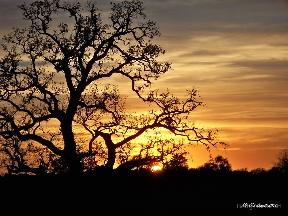 Fading Sun - Sun dropping on the horizon by Betty Northcutt