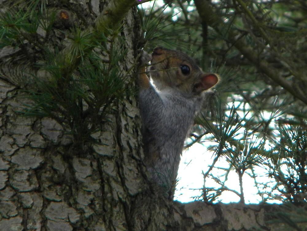 Mr. Squirrel by mlaikens