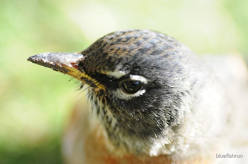 Robin Portrait by bluefishrun