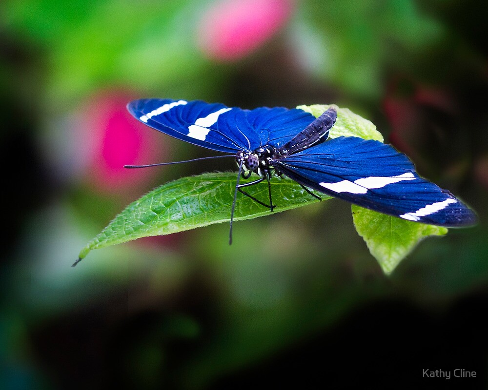 Butterfly Blues by Kathy Cline
