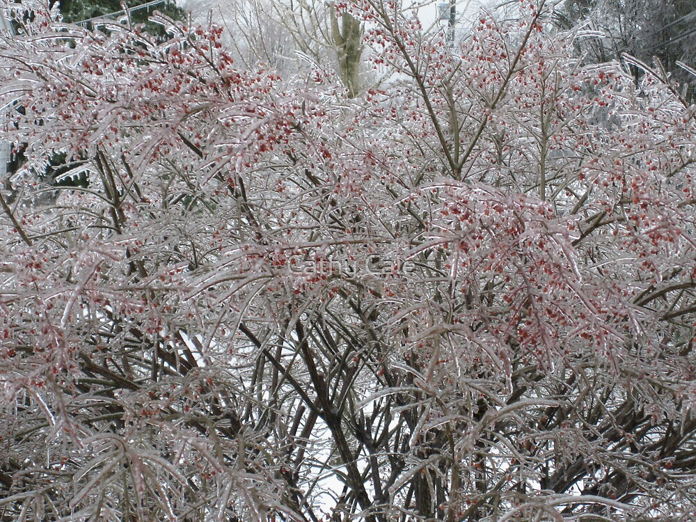 Frozen Berries by Cathy Cale
