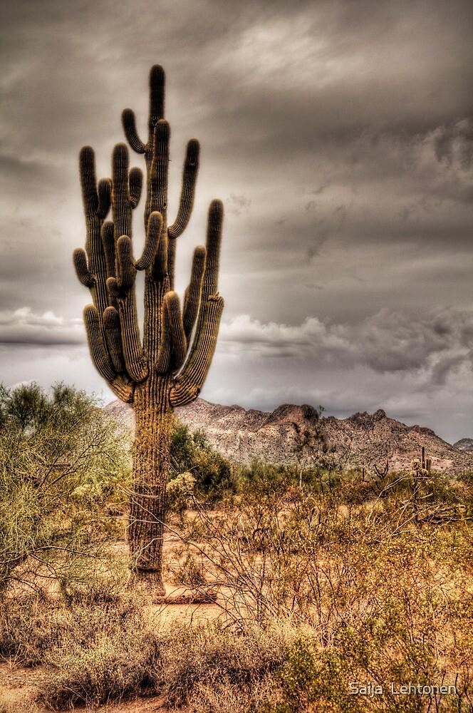 Saguaro by Saija  Lehtonen