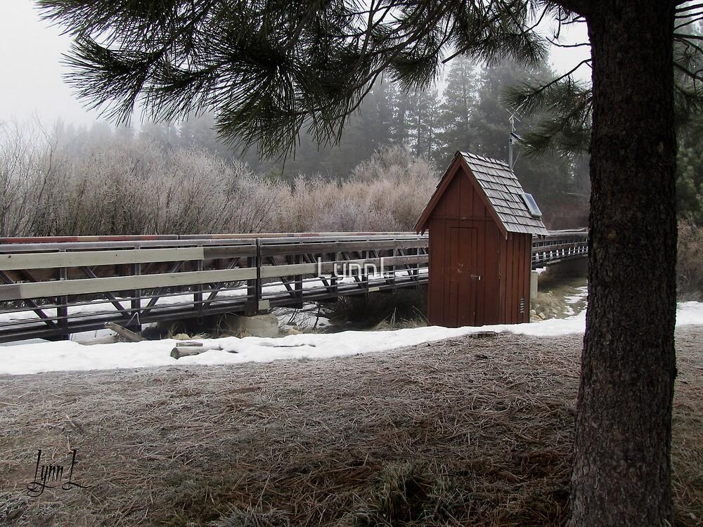 River Bank in Frost by LynnL