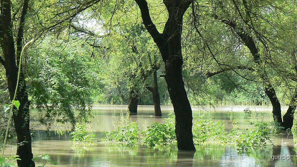 Flooded wilderness_pehla by gundip