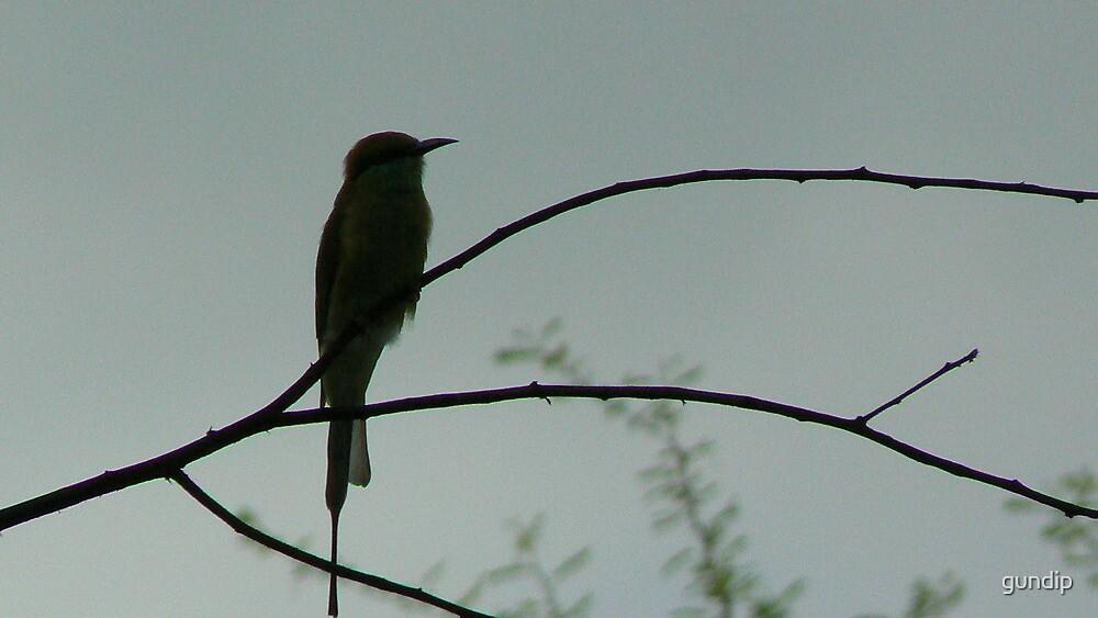 Bird on a tree by gundip