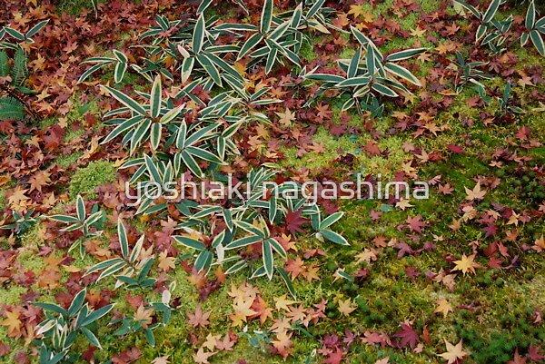 Fallen leaves of garden , KYOTO     by yoshiaki nagashima