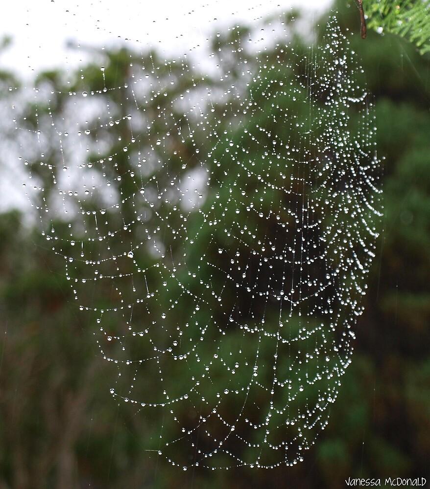 Morning dew by vmcdonald
