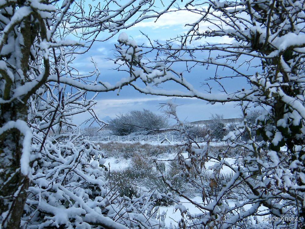 Winter's beauty by Joyce Knorz