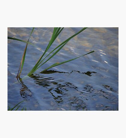Ripples in the water Photographic Print