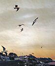 Seagulls at dawn, Clevedon, UK by David Carton