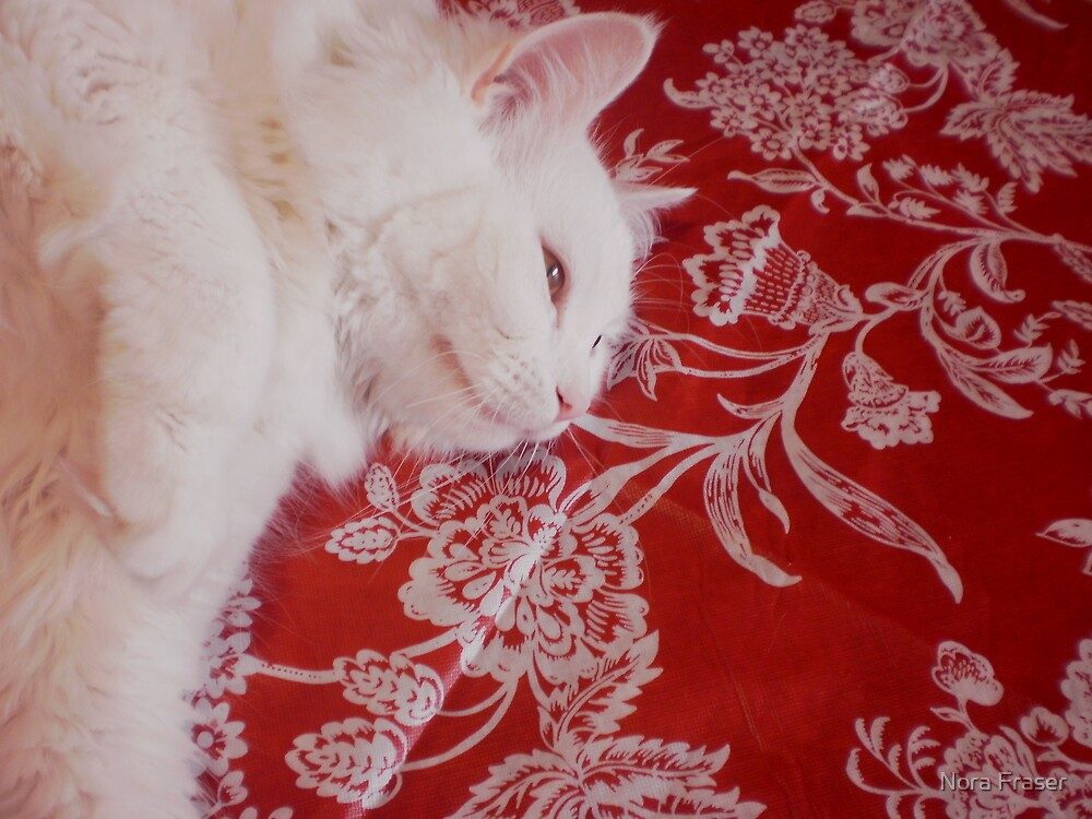 Sugar on new table cloth by Nora Fraser