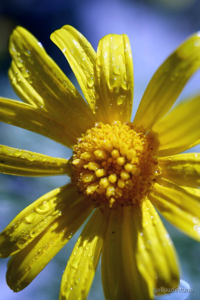Yellow Flower Had A Shower by yellowfintuna