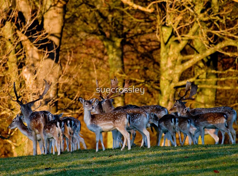 park deer by suecrossley
