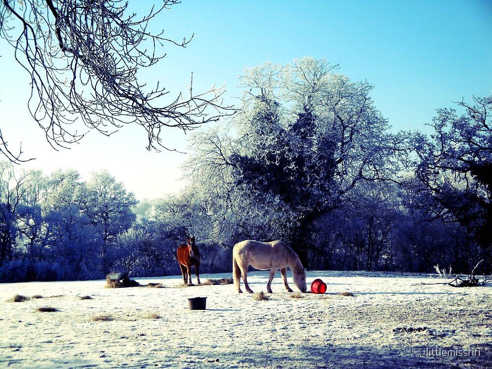 winter bloom by littlemissriri