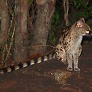 Night visitor by Explorations Africa Dan MacKenzie