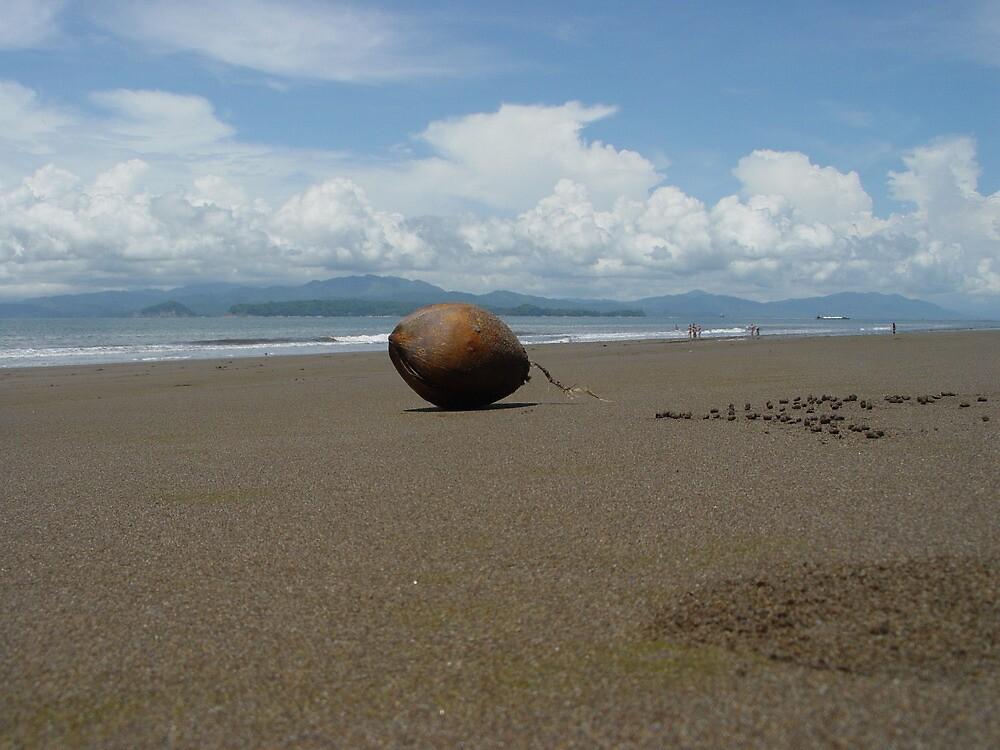 coconut by Branislav Karas
