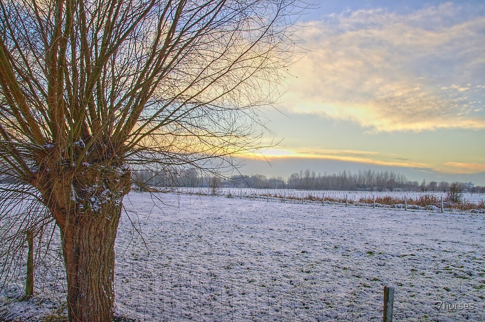 Willow in Flanders Snow by 7horses