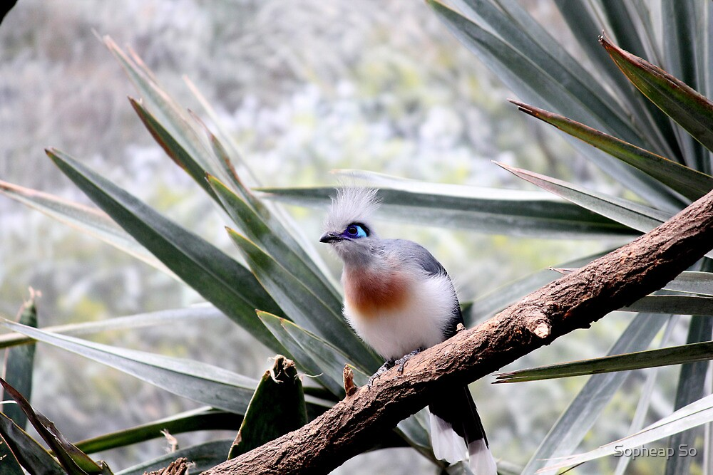 Pretty Bird2 by Sopheap So