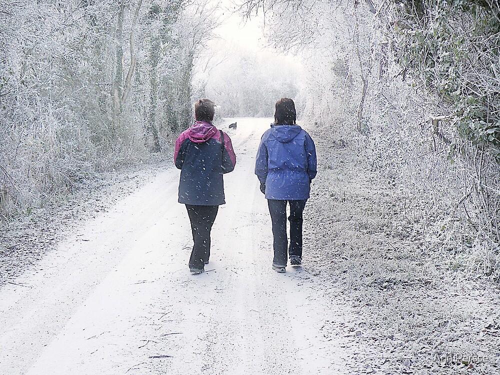 A Walk down the Lane  by Ann Persse