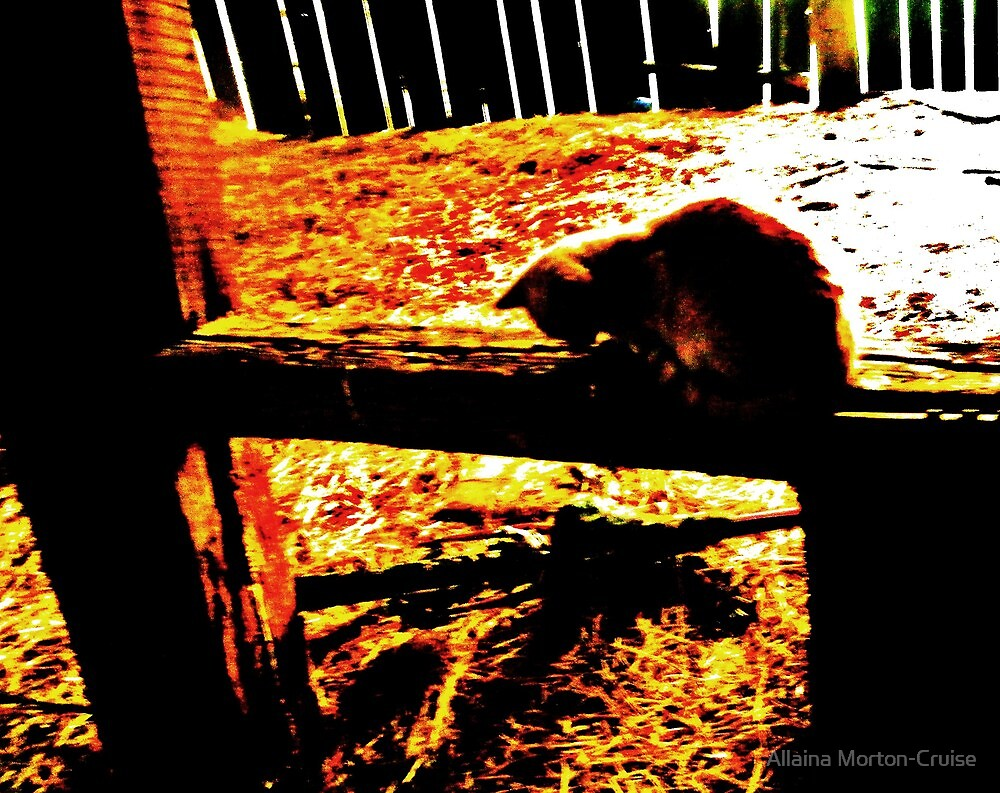Barn Cat by Allaina Morton-Cruise