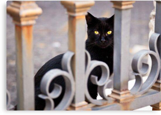 Cat Eyes by Phill Danze