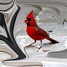 Cardinal in a whirl! by April-in-Texas