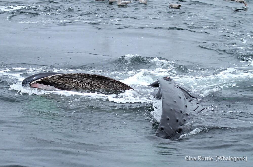 Eye Of The Whale by Gina Ruttle  (Whalegeek)