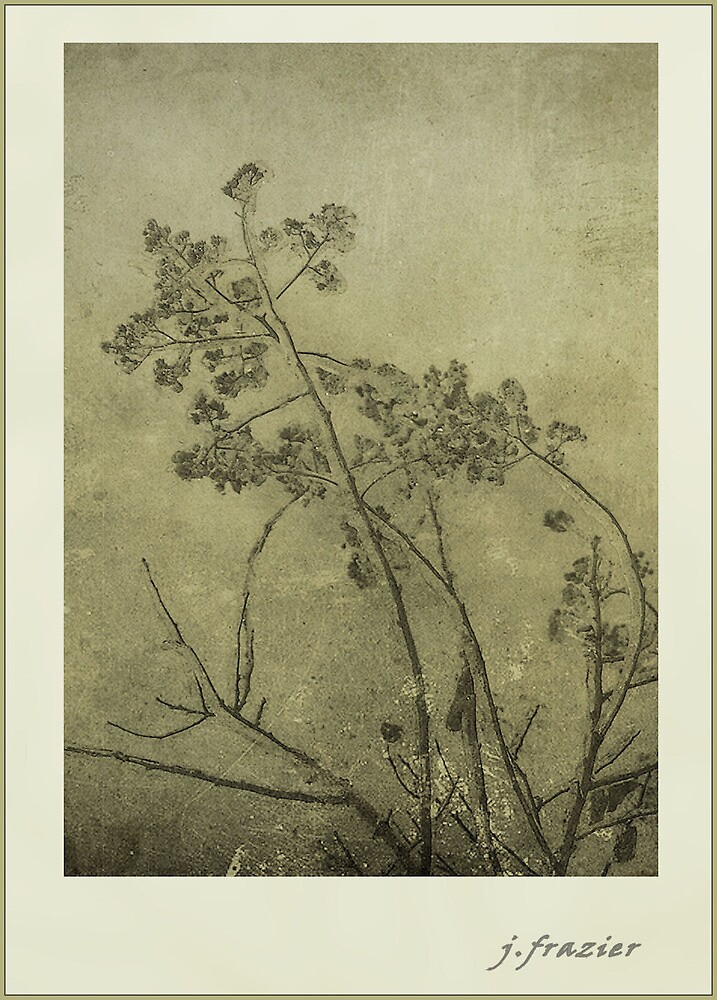 Etching by schoodic
