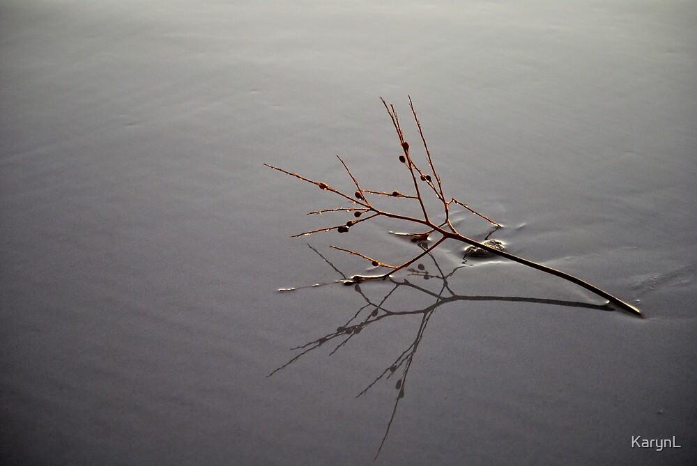 Driftwood by KarynL
