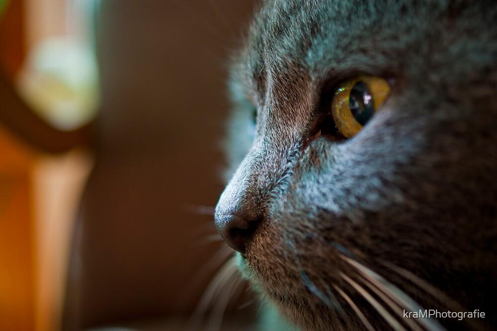 The Feline Persuasion by kraMPhotografie