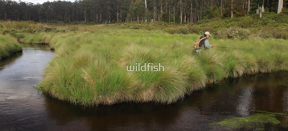Wild Fish by wildfish