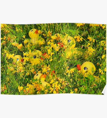 """""""Hide and Seek"""" - rubber duckies hiding in the flowers Poster"""