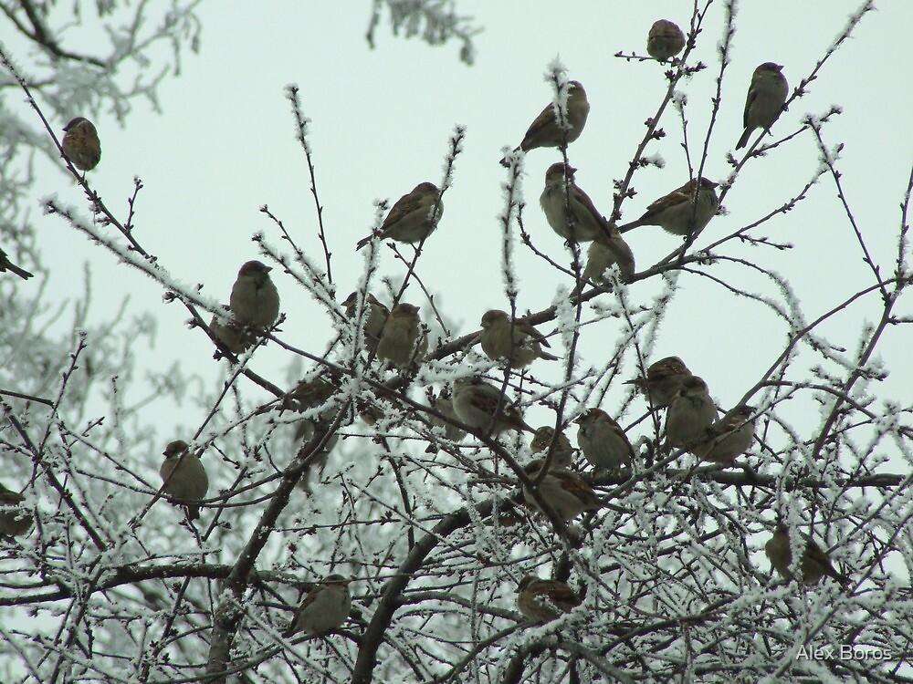 Sparrows by Alex Boros
