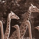 """Neck Parade"" - giraffes and ostriches parading? by ArtThatSmiles"