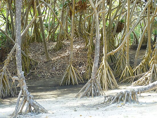 Pandanus Trees - Port Resolution by Henry Inglis