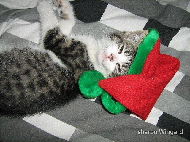 santa kitten by sharon Wingard