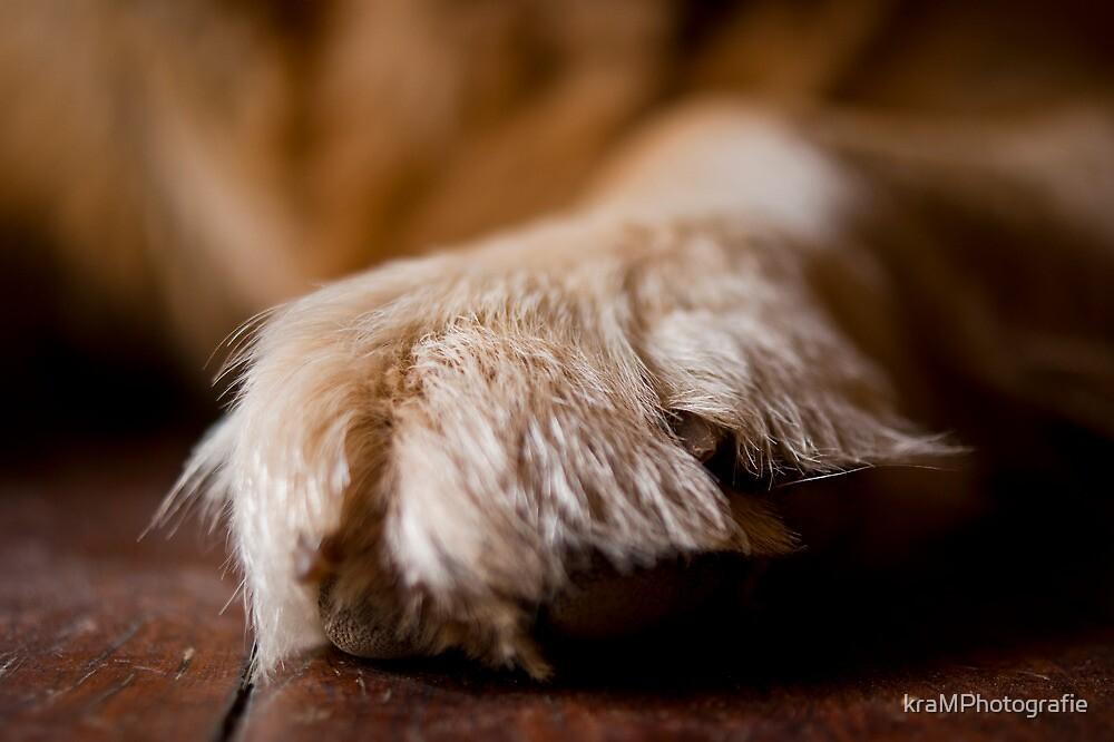 Golden Paw by kraMPhotografie