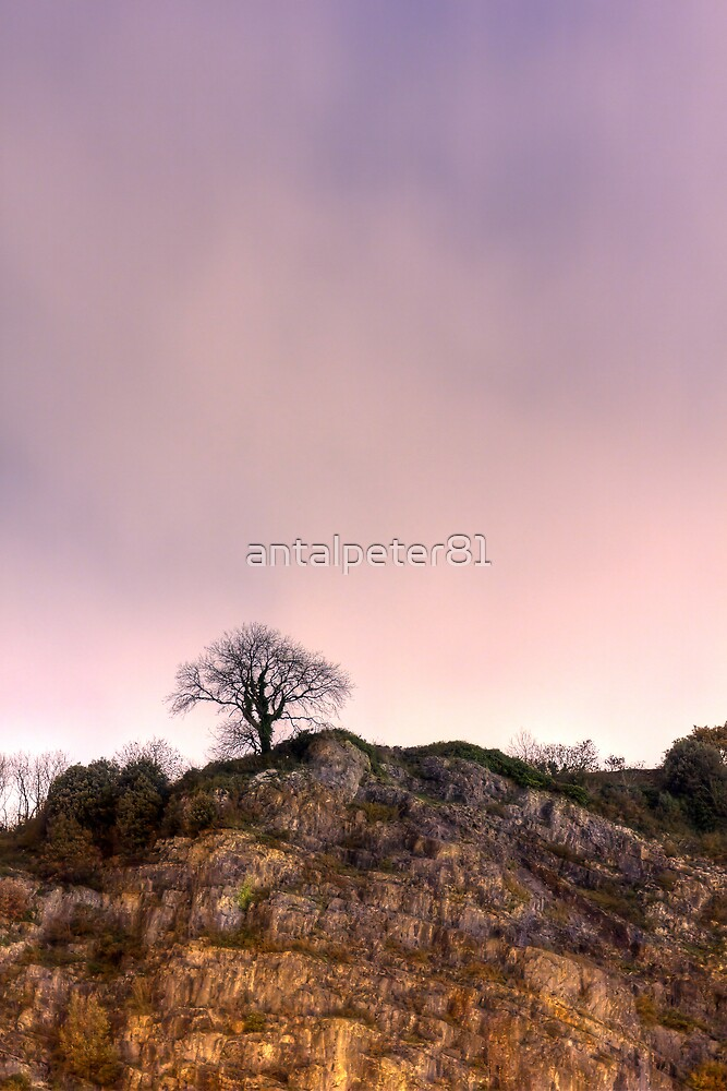 Lonely tree on a cliff by antalpeter81