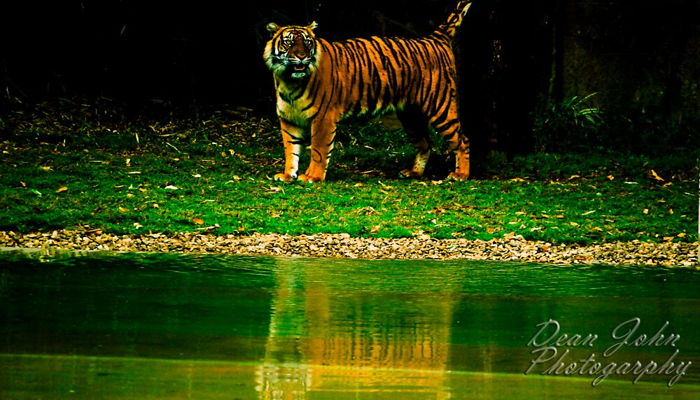 Crouching Tiger, Hidden Dragon. by DeanLimages